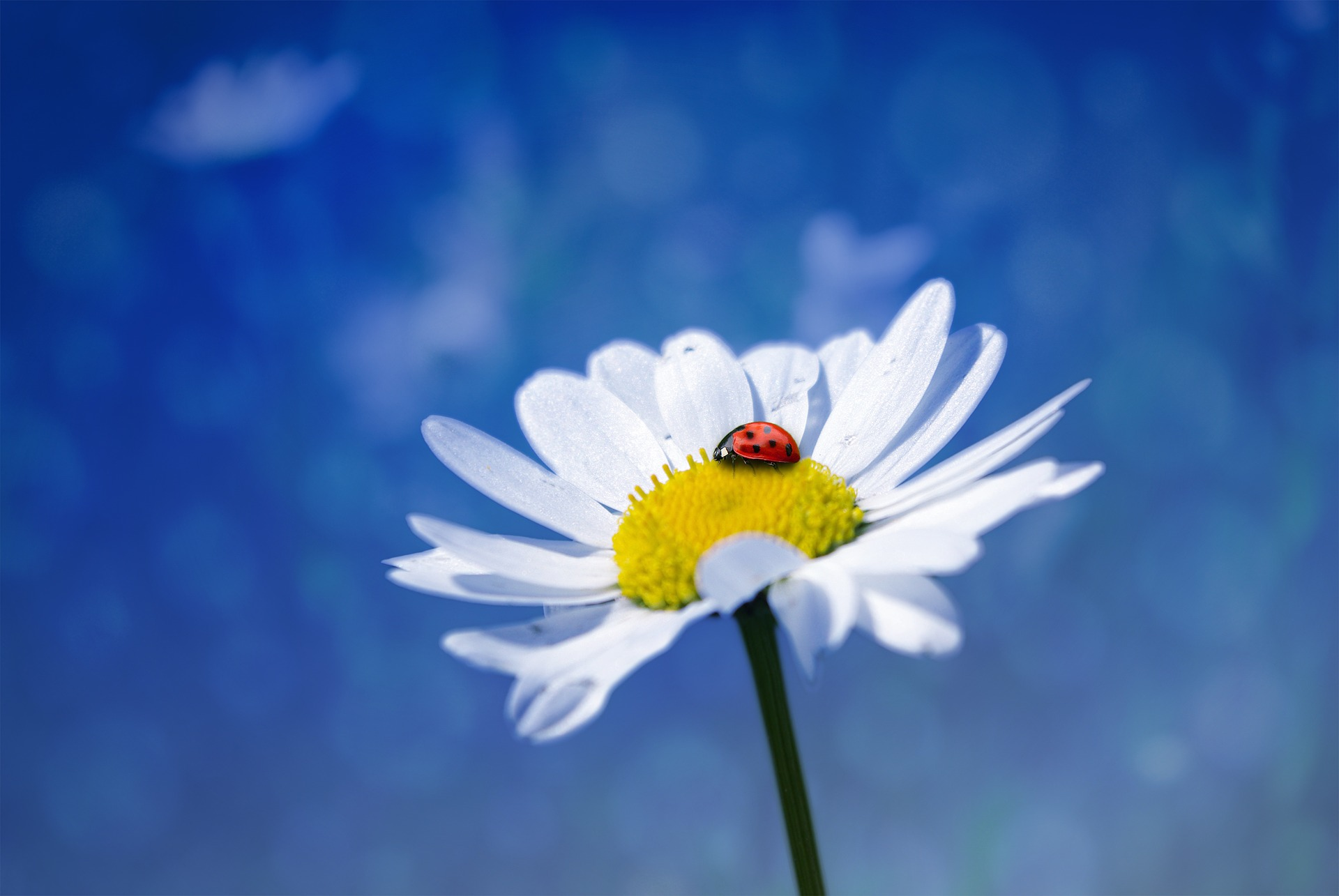 Flower 1320568 1920